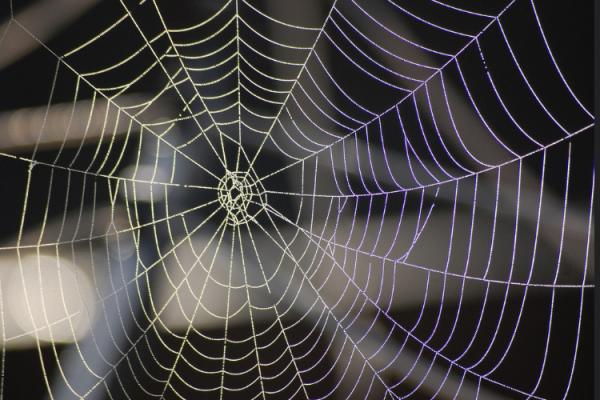 Creep Catcher-web